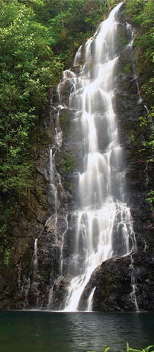 belize-quick-facts-rainforest.jpg